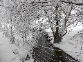 River bank in snow