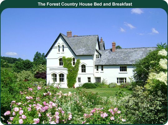 The Forest Bed and Breakfast Newtown